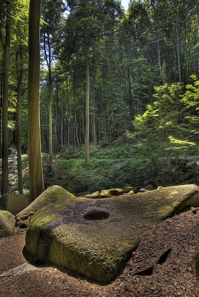 Märchenwald am Felsenmeer