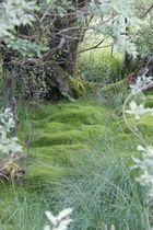 Märchenwald im Hohen Venn