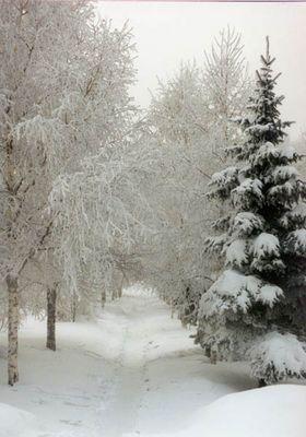 Märchenwald in Winter