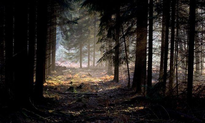 Märchenwald - und es gibt ihn doch!