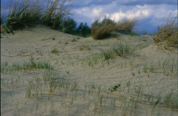 Märkischer Sand....