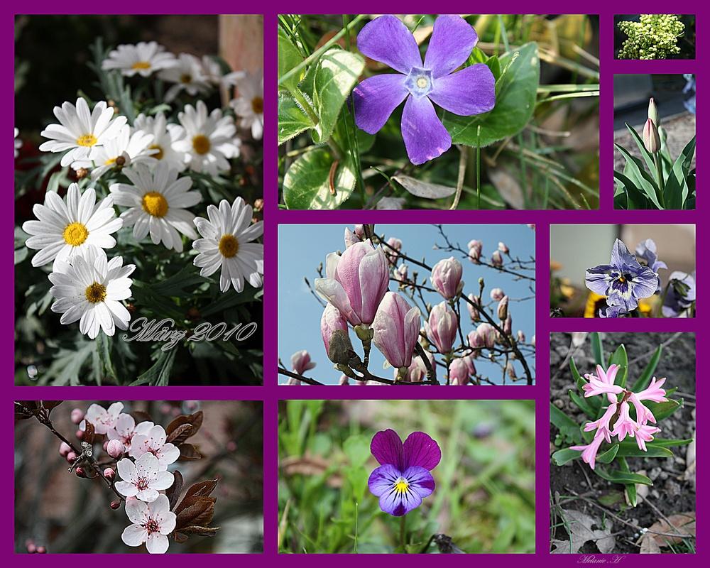März 2010 Collage.....