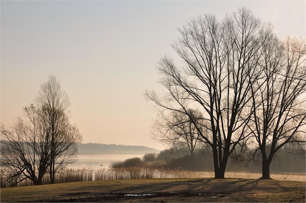 März - Nebel...