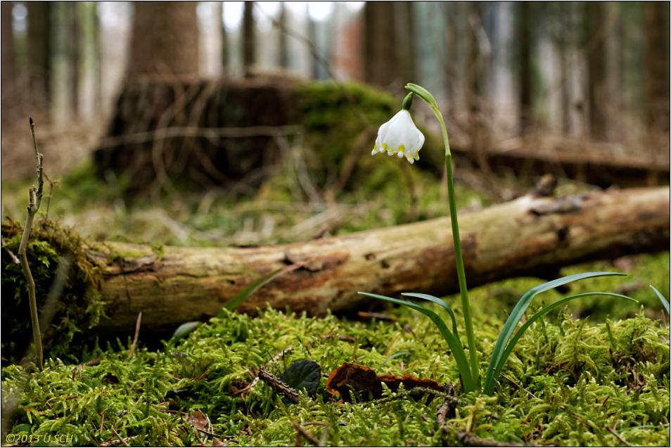 Märzenwald I