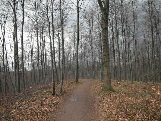 Märzwald