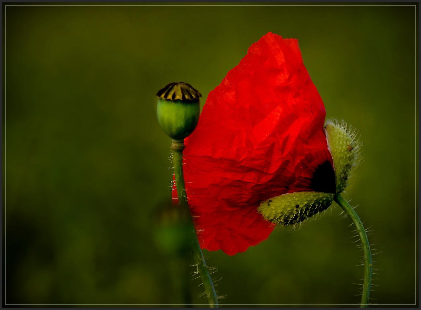 Mäulchen auf und Blüte raus, ...