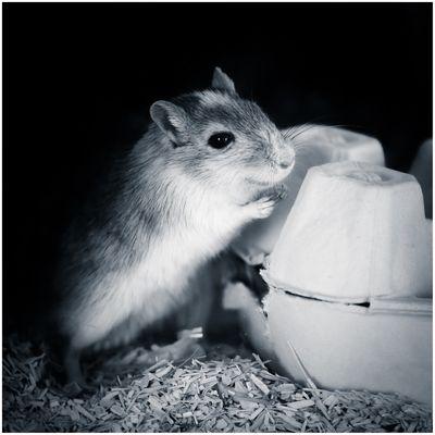 Mäuschen bei der Arbeit...