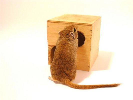 Mäuse 1