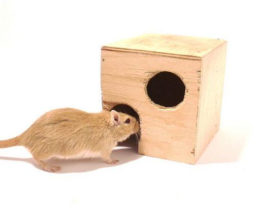 Mäuse 2