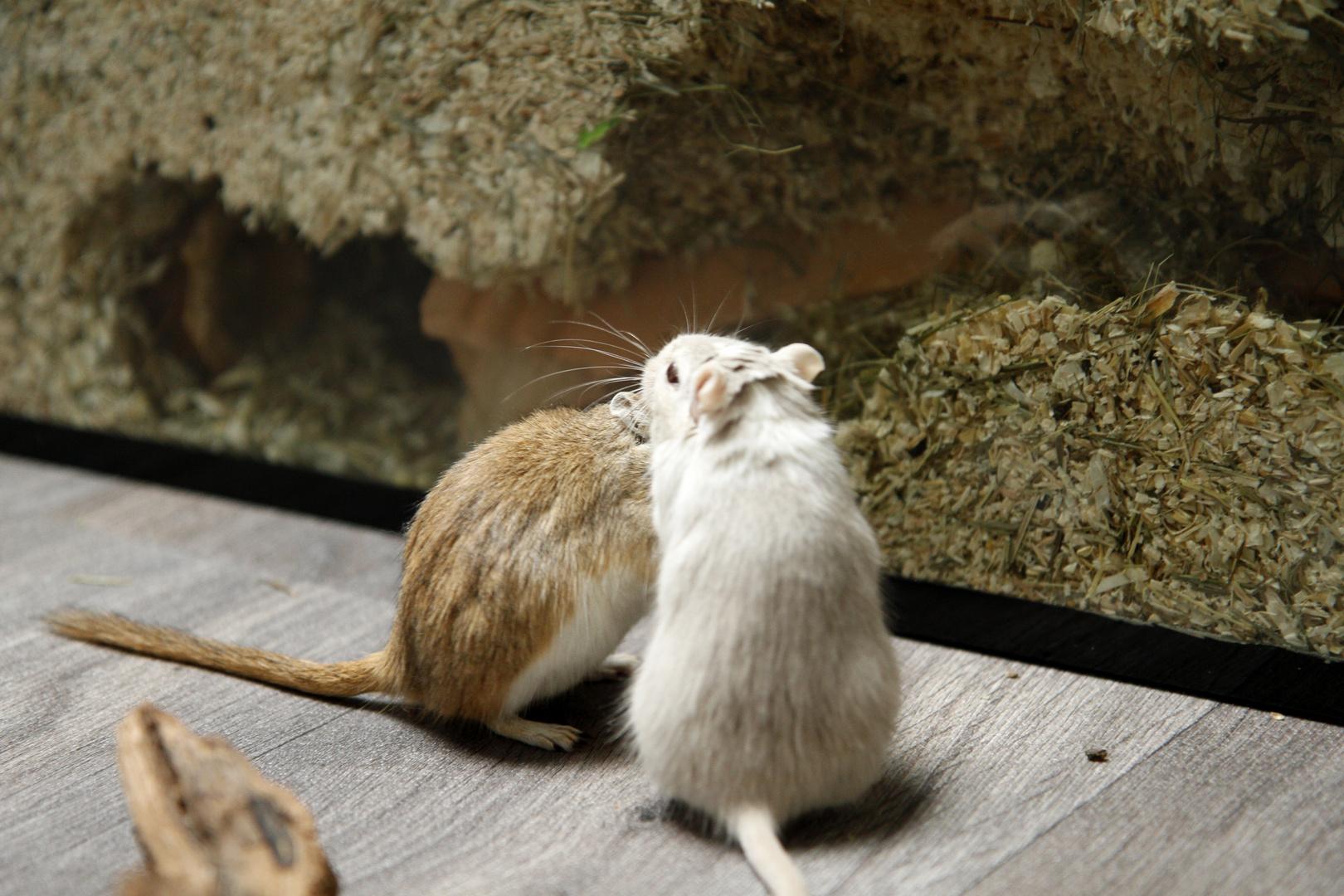 Mäuse :)