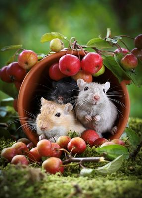 Mäuse-Eintopf