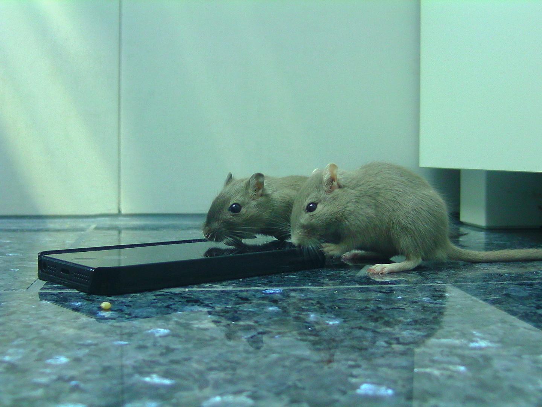 Mäuse und die Technik