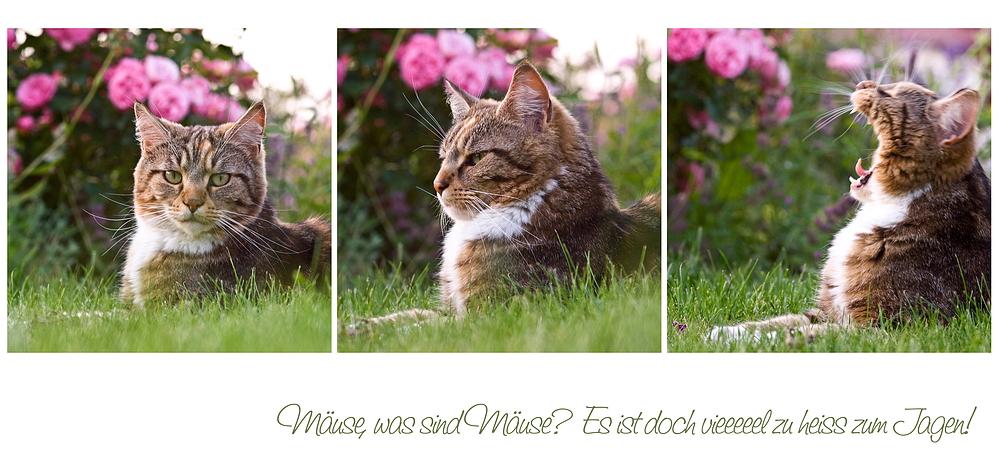 Mäuse, was sind Mäuse?