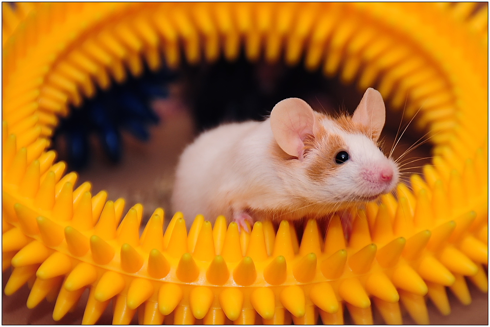 ~ Mäusezähnchen ~