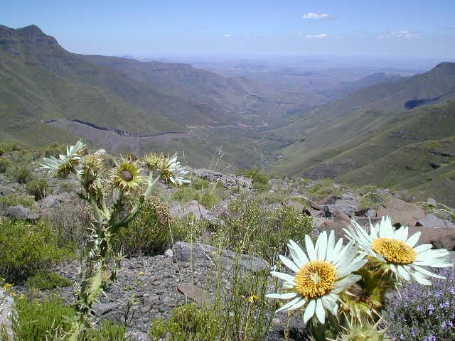 Mafika Lisiu Pass, 3090 mtr.