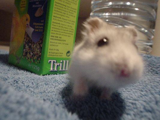Maggie die Hamsterin