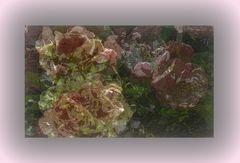 Maggio....di rose!....
