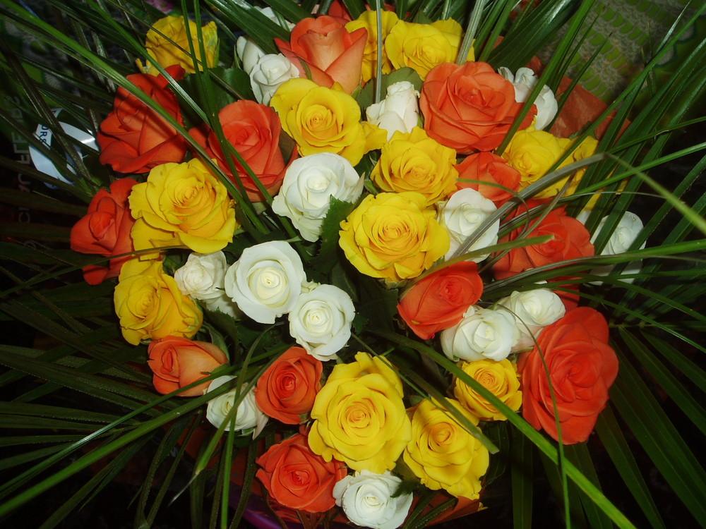"""......Maggio......il mese delle """"Rose """"......."""
