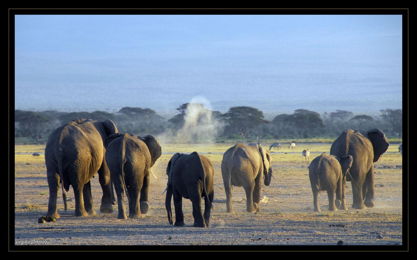 Magic Amboseli...