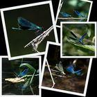 Magic Blue
