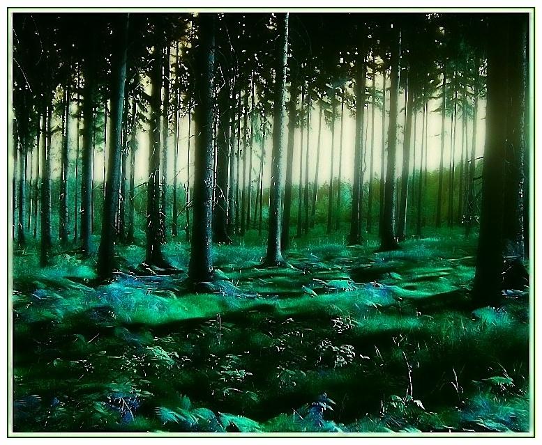 magic forest **