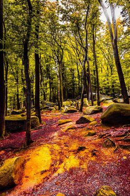 magic forest 3