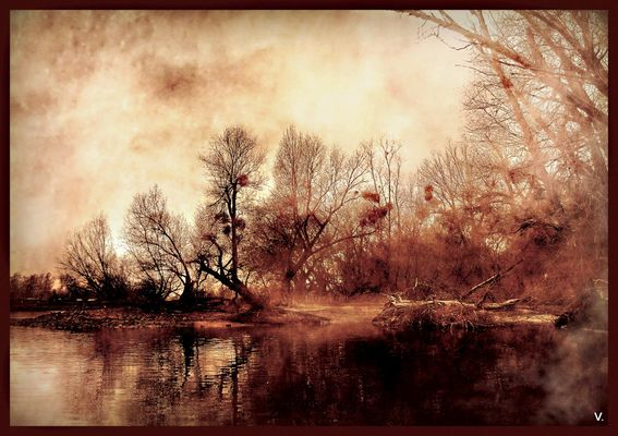 Magic Forest...