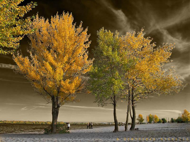 Magic l'automne sur les îles du Dniepr
