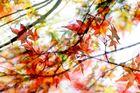 Magic-Moments, der Herbst ist bunt