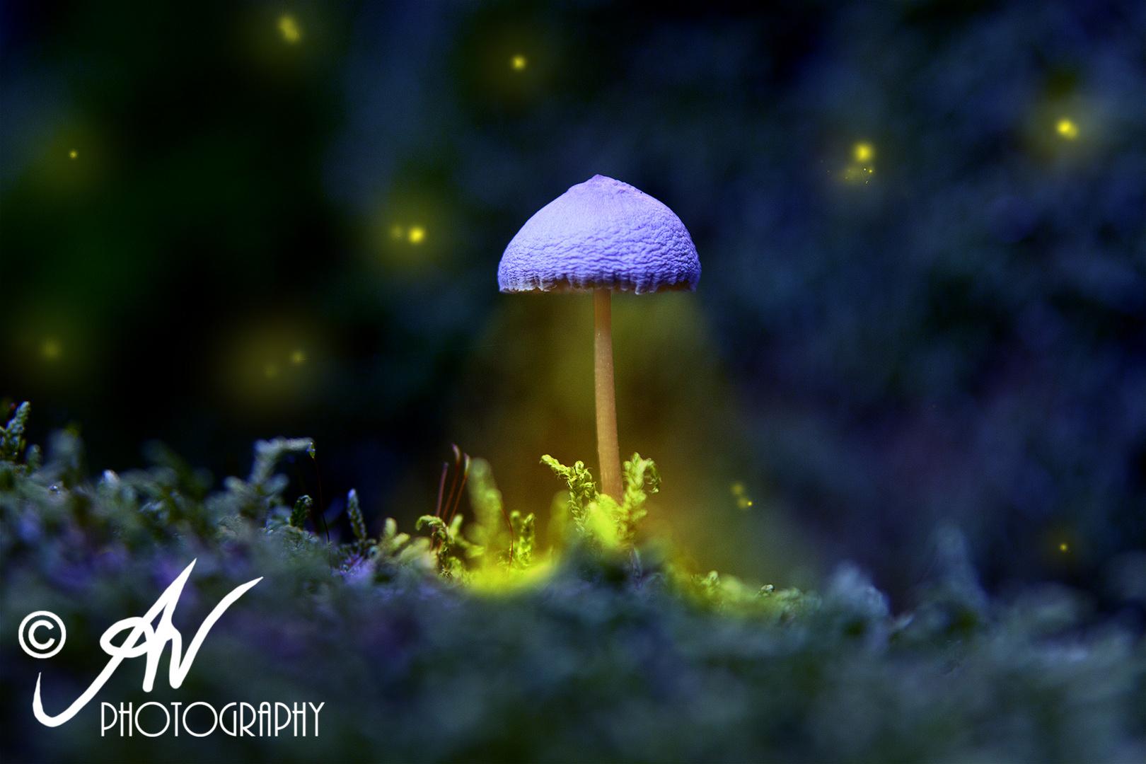 Magic Mushroom ;)