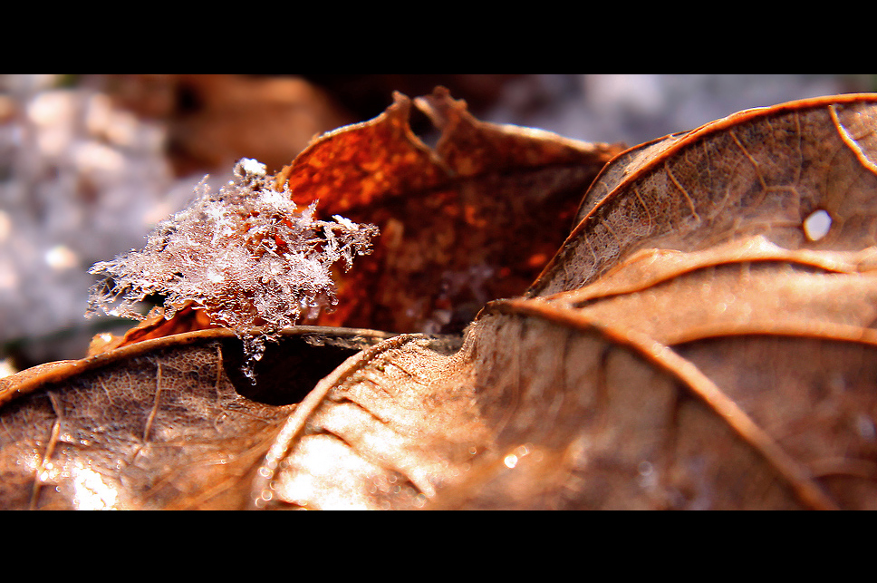 * magic of ice *