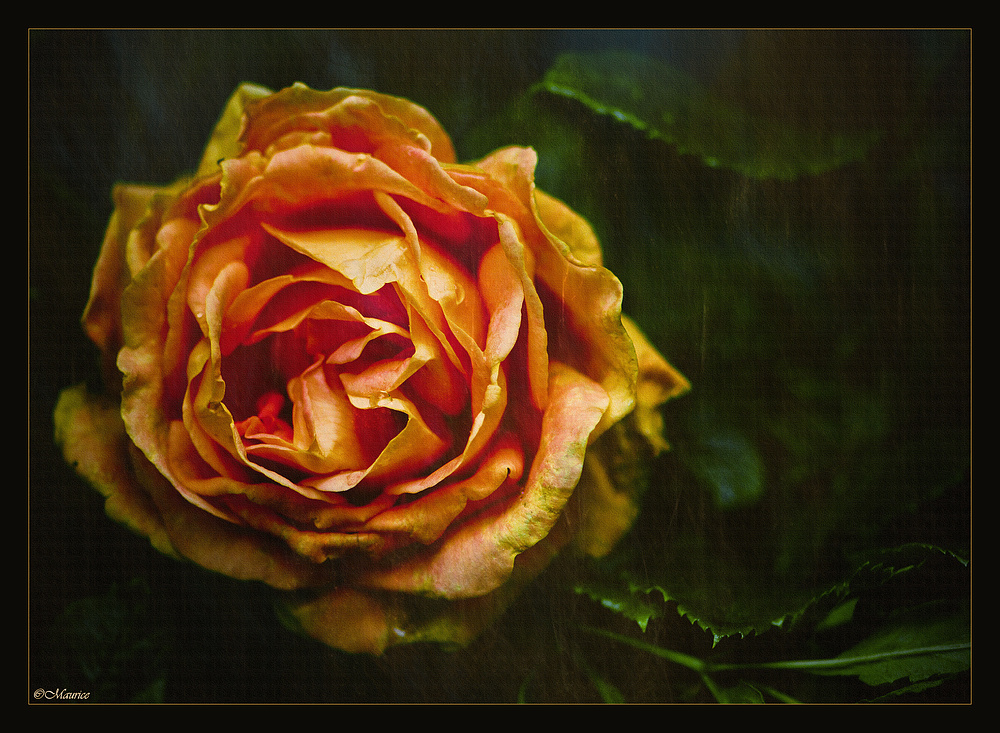 * MAGIC ROSE *