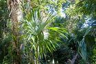 Magic Tikal 10