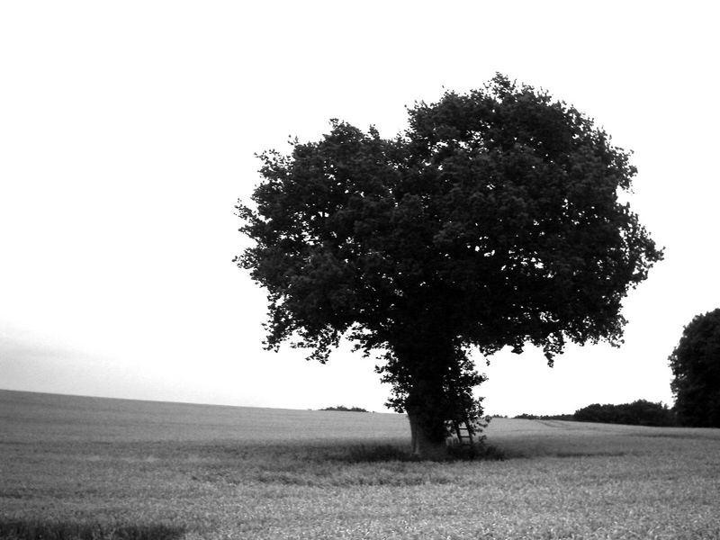 **Magic Tree**