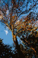 Magic Trees - III