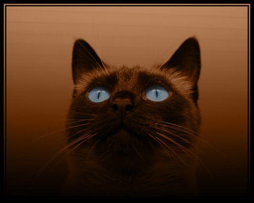 *magical eyes*