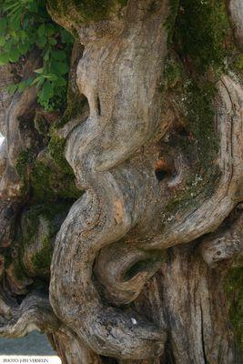 magie d'un tronc...
