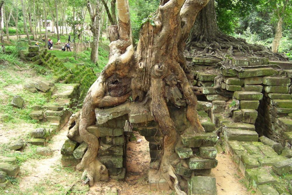 Magischer Baum