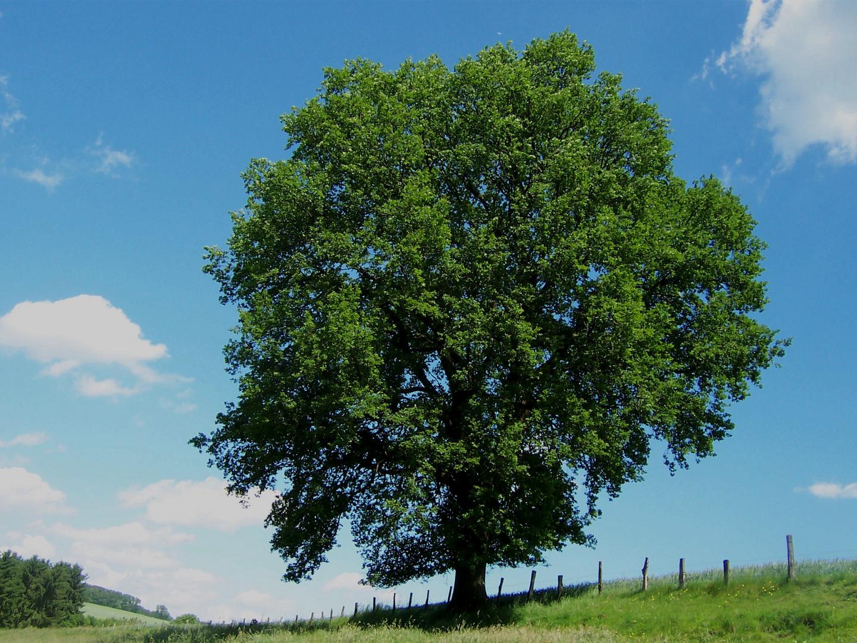 magischer Baum (neu)