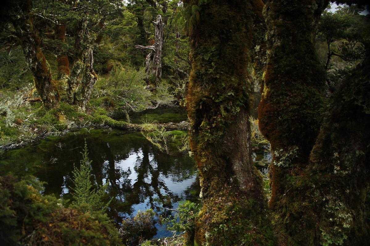 Magischer Wald in Neuseeland