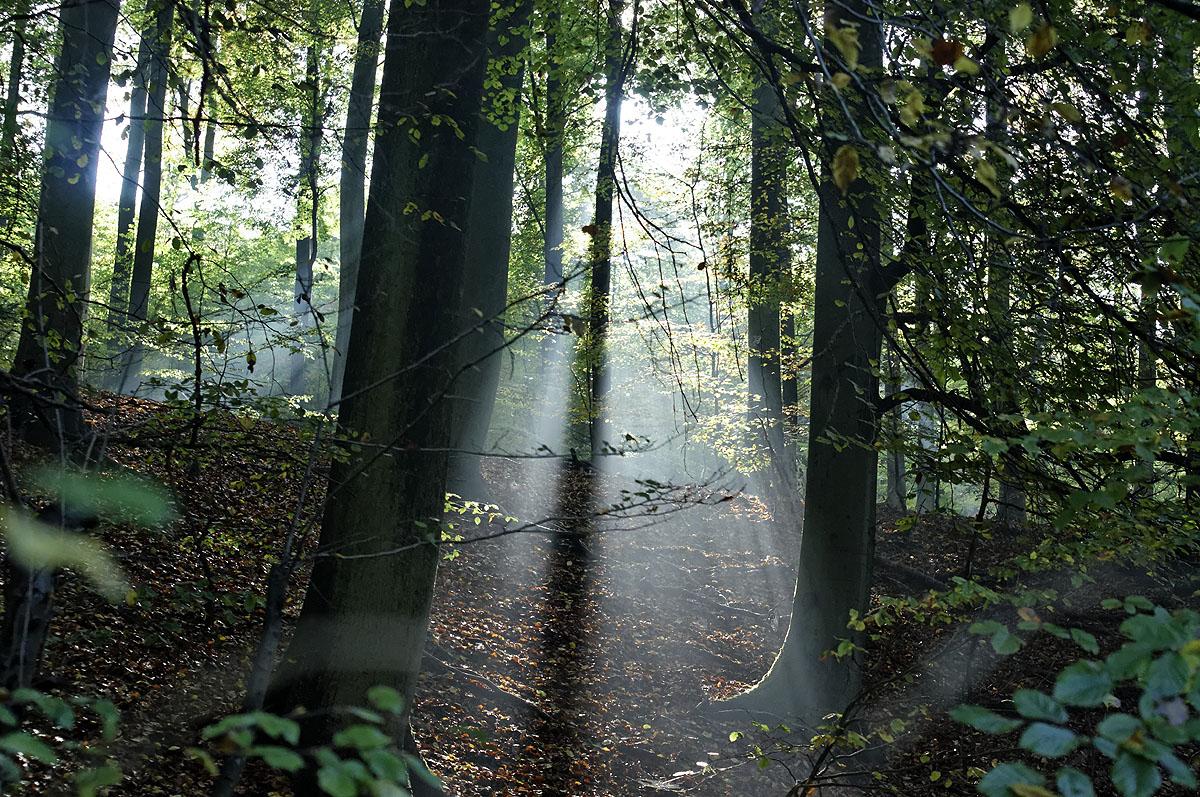 Magisches Licht im Saarbrücker Urwald