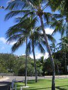 Magnetic Island - Queensland / Australia