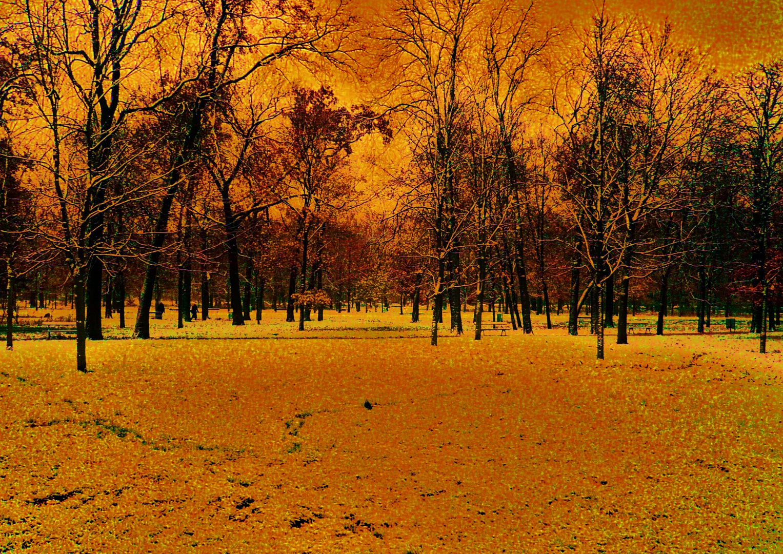 Magnifique étendue d'arbres...