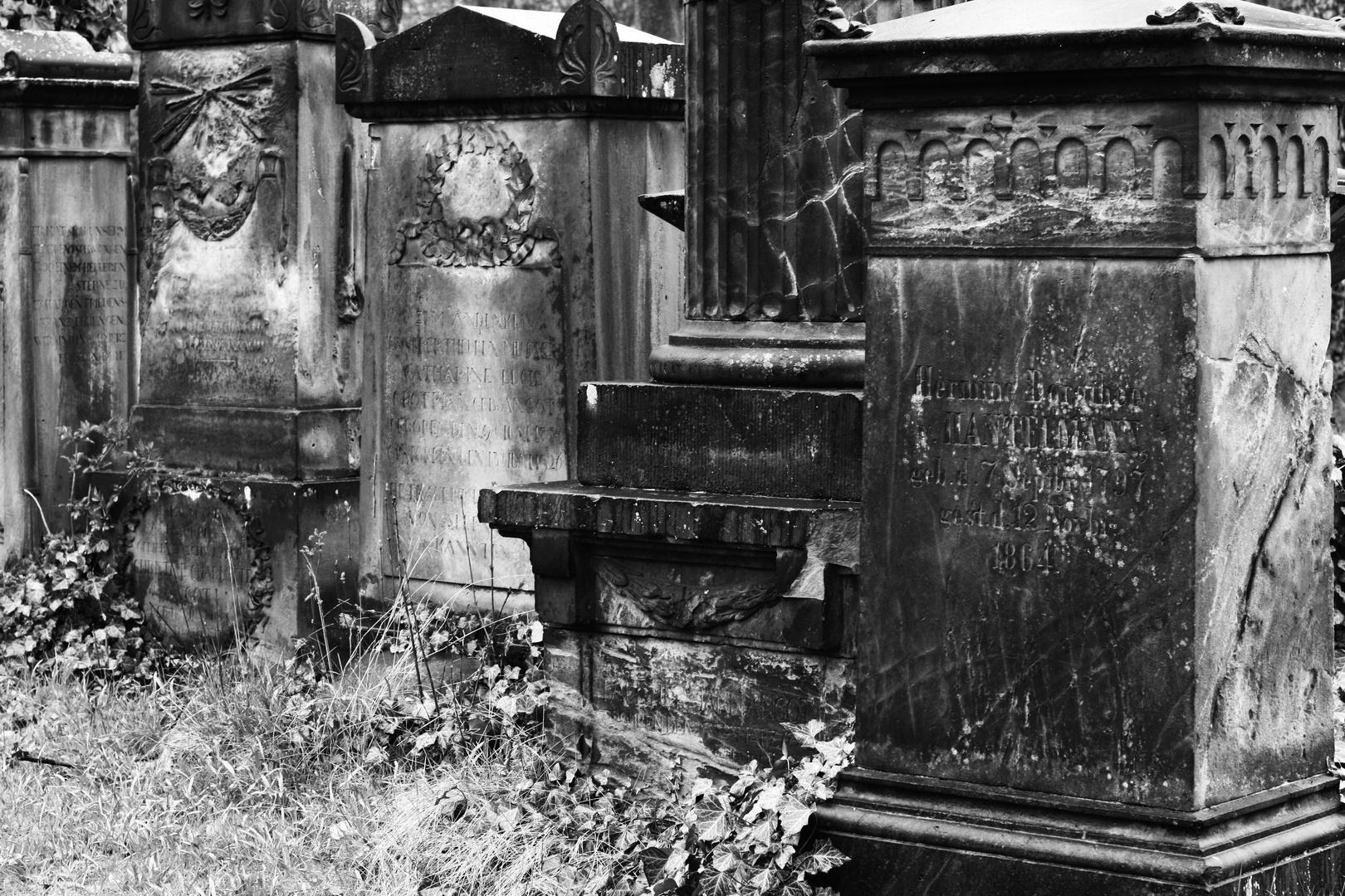 Magnifriedhof Braunschweig V