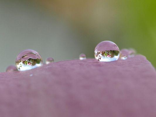 Magnolian Eyes (frog-eyes)