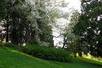 Magnolias (2)