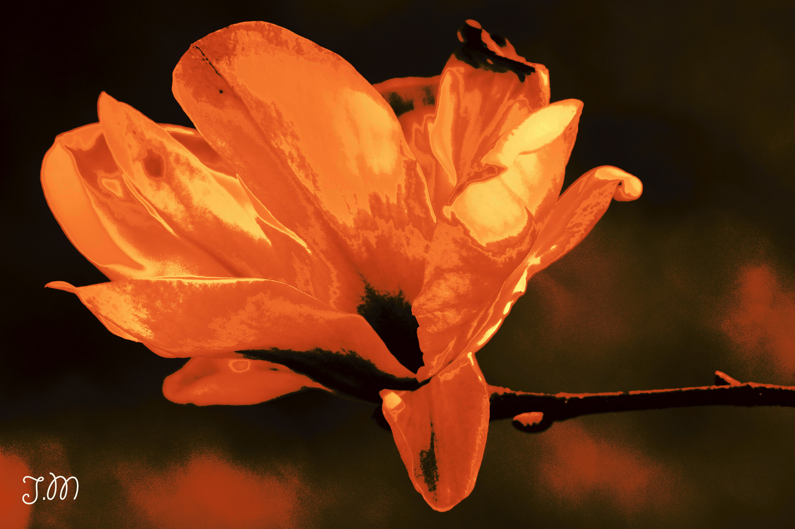 Magnolie (vergoldet) ;-)