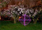 Magnolien bei Nacht I