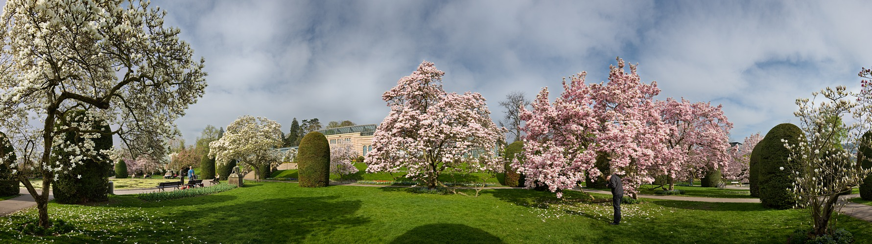 Magnolien Panorama 1
