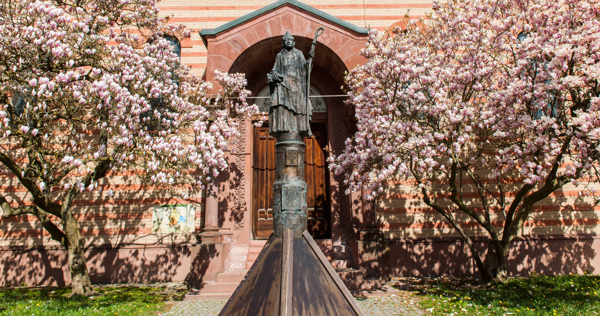 Magnolien vor unserer Pfarrkirche - St. Jakob in Friedberg